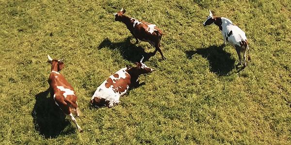 Químicos para ganadería y Agricultura